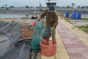 Khó khăn ở vùng nuôi trồng thủy sản ở Uông Bí