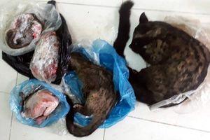Phạt chủ tịch Hội chữ thập đỏ xã vì đăng ảnh động vật hoang dã bị giết để chào bán cho khách