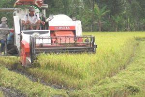 Đầu tư khoa học trong nông nghiệp: Chỉ bằng 1/10 Thái Lan