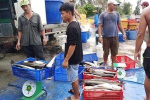 Cảnh báo tảo độc trên vùng nuôi trồng thủy sản Vân Phong