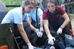 Cứu hộ gấu chó 16 năm tuổi tại Lâm Đồng