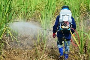 Greenpeace kiện một Bộ trưởng Ba Lan cho dùng thuốc trừ sâu bị cấm