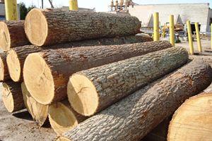 Việt Nam ngừng nhập gỗ rừng tự nhiên từ Lào và Campuchia