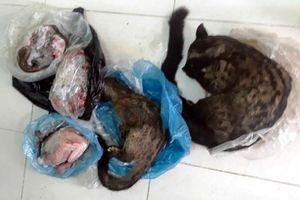 Cán bộ xã bị phạt khi rao bán động vật hoang dã trên Facebook