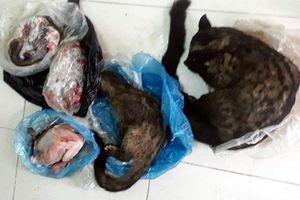 Xử phạt Chủ tịch hội chữ thập đỏ lên Facebook rao bán động vật hoang dã