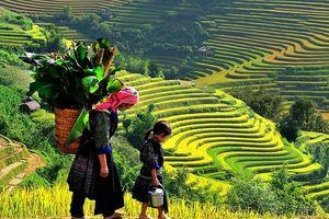 Thúc đẩy bình đẳng giới trong nghiên cứu nông nghiệp tại Việt Nam