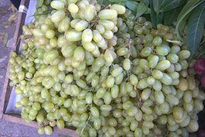 Vì sao xuất hiện nông sản nước ngoài 'đội lốt' hàng Việt Nam?