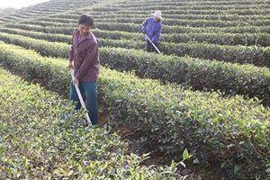 Cách thoát nghèo của các huyện miền núi Nghệ An