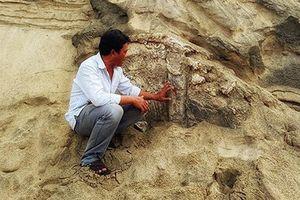 Tiến hành nghiên cứu, xác định giá trị di tích mới phát hiện ở Quảng Nam