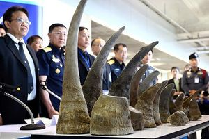 Chặn 'bàn tay' tận diệt tê giác và hổ