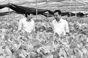 Quảng Bình thu hút doanh nghiệp đầu tư vào nông nghiệp