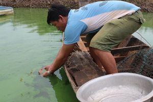 Bà Rịa - Vũng Tàu: Nước hồ chuyển màu xanh, cá chết