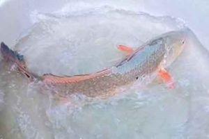 Một ngư dân ở Bình Định bắt được cá lạ