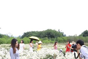 Hàng trăm người dân Hà thành 'đổ bộ' về vườn cúc họa mi
