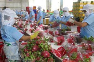 Bắc cầu để quan hệ thương mại Việt Nam-Ấn Độ tiến xa