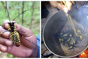 Món nhện rừng đặc sản ở Bình Thuận ăn giống thịt cua, cực bổ dưỡng