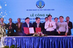 Lần đầu tiên Việt Nam sản xuất thành công vắc xin thương mại phòng bệnh lở mồm long móng type O