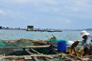 Cần chấm dứt tình trạng nuôi hải sản tự phát tại vùng cảng biển