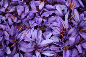 'Thần dược' sắc đẹp nhụy nghệ tây và phép màu cho kinh tế Hy Lạp