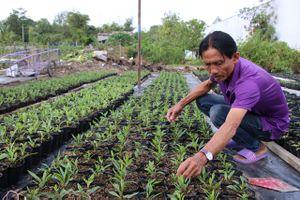 Nhiều giống hoa mới phục vụ thị trường Tết Nguyên đán 2019