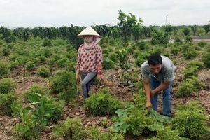 Xây dựng nông thôn mới ở Nam Định: Chọn mô hình phù hợp, xây công trình hiệu quả