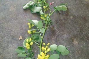 Hà Tĩnh: Uống thuốc lá cây trong vườn, vợ tử vong, chồng nguy kịch