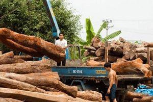 Tạm dừng kinh doanh tạm nhập, tái xuất gỗ từ Lào và Campuchia