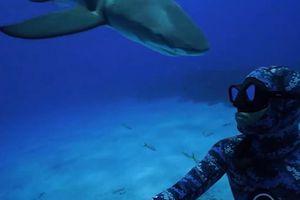 Cá mập cụng đầu thợ lặn dưới đáy biển