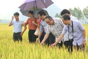 Công ty TNHH MTV Đầu tư và phát triển nông nghiệp Hà Nội: Đáp ứng nhu cầu nông sản cho Thủ đô