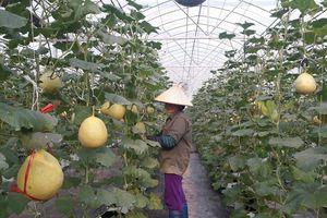 Kết nối sản xuất, tiêu thụ nông sản an toàn