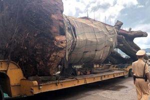 CSGT Bình Định tạm giữ xe đầu kéo chở cây 'siêu khủng'