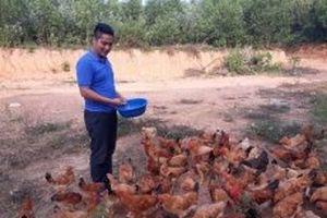 Cử nhân sư phạm về quê lập trang trại phát triển kinh tế
