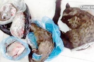 Bị phạt vì buôn động vật rừng