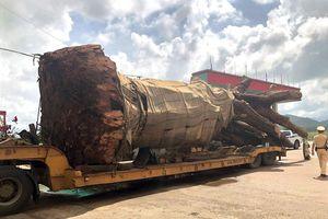 CSGT Bình Định tạm giữ xe đầu kéo chở cây 'quái thú'