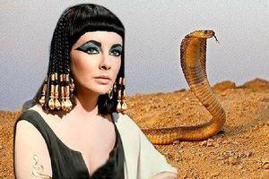 Bí ẩn về loài rắn của nữ hoàng Cleopatra