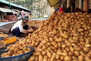 Cần xử lý mạnh tay với nông sản 'đội lốt' hàng Việt