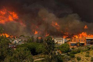Kinh sợ trước sức tàn phá của 'giặc lửa' trong các vụ cháy rừng trên thế giới