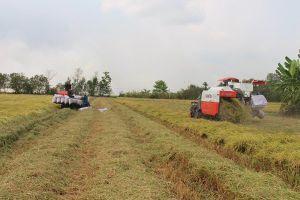 Việt Nam trúng thầu bán 118.000 tấn gạo cho Philippines