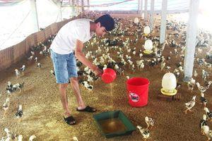 9X bỏ đại học, về quê... nuôi gà