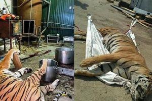 Bên trong trang trại giết hổ trái phép phục vụ người Việt ở Séc