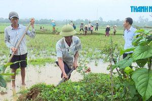 Hàng vạn người dân Quảng Bình phải ra đồng diệt chuột vì sinh sôi quá nhiều