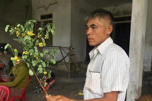 Vợ tử vong nghi do hái lá cây trong vườn uống: Người chồng cũng đã tử vong