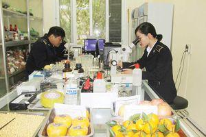 Triển khai Cơ chế một cửa quốc gia lĩnh vực Nông nghiệp: Ghi nhận ở biên giới Lạng Sơn