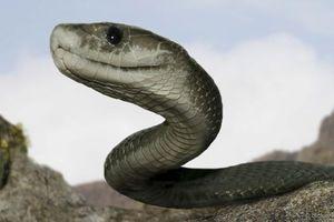 Thực hư thông tin rắn khổng lồ ăn thịt trẻ con ở Indonesia
