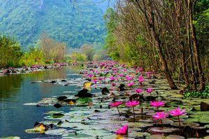 Chiêm ngưỡng vẻ đẹp nên thơ của thắng cảnh Chùa Hương