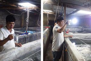 Thu lãi cao từ sản xuất cá chẽm giống