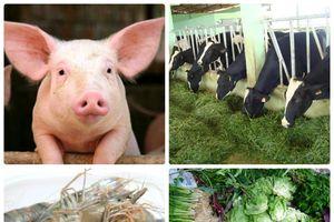TP.HCM ứng dụng công nghệ sinh học để nâng cao năng suất và chất lượng trong nông nghiệp