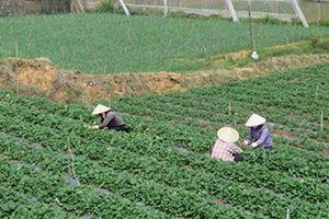 Lâm Đồng: Thúc đẩy giảm nghèo và xây dựng nông thôn mới vùng DTTS
