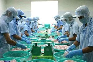 Thủy sản Cửu Long An Giang (ACL) tạm ứng cổ tức 20% bằng tiền mặt
