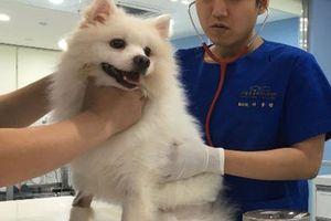 285.000 thú cưng tại Seoul được gắn chíp để phòng ngừa bị lạc